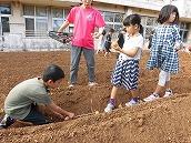 ジャガイモ植え (11)