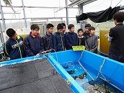 サンゴの植え付け (1)