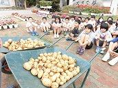 ジャガイモ (1)