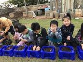 チューリップ植え (5)
